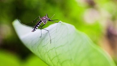 Photo of Best Backyard Mosquito Control